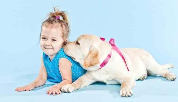 10 razze di cani per bambini piccoli e neonati - labrador