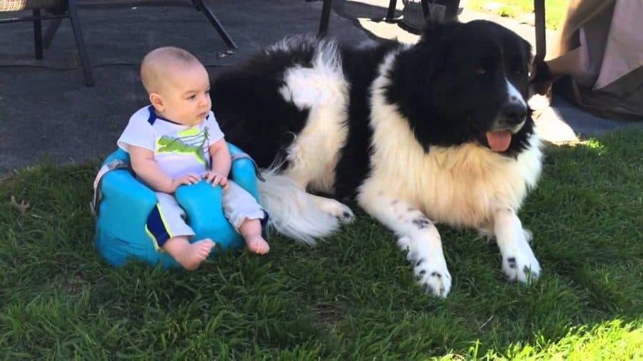 10 razze di cani per bambini piccoli e neonati  BabyClickit
