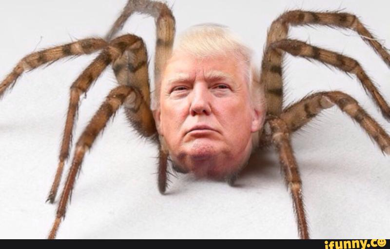 Image result for trump as a spider image