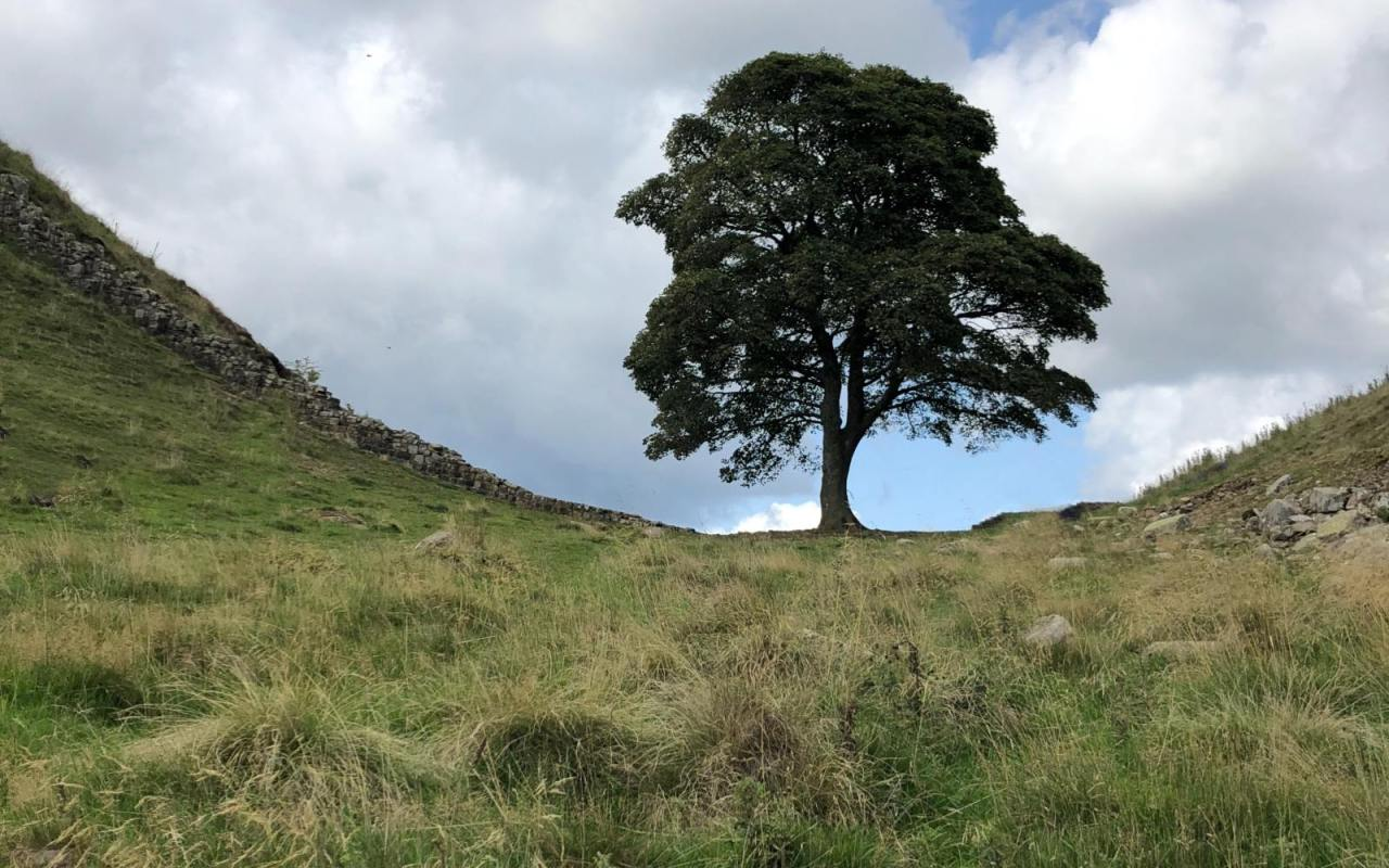 sycamore gap walk for families