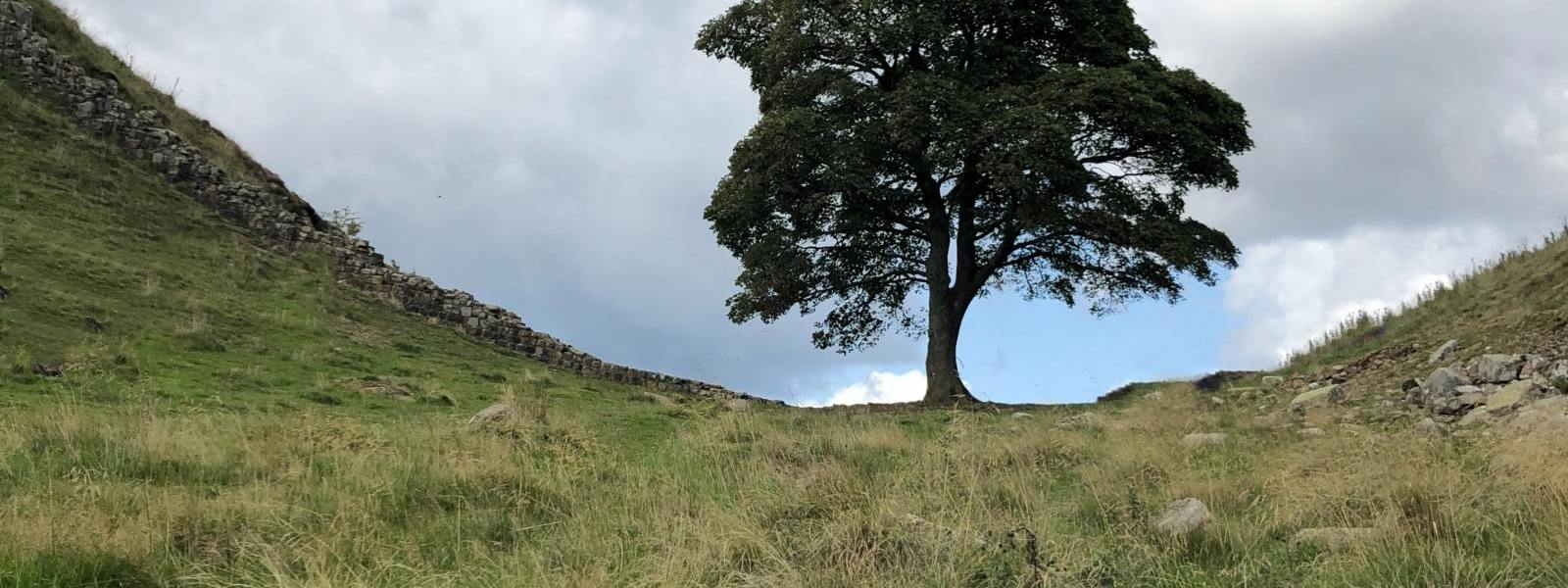 Steel Rigg and Sycamore Gap family-friendly walk