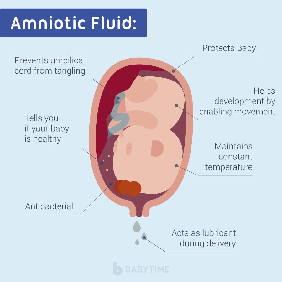 Amniotic Fluid: What is it? | BabyTime | BabyTime