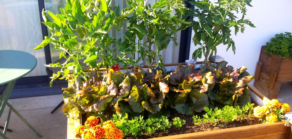 Bac à plantes en culture-cultiver chez soi