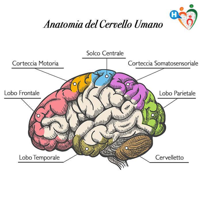 IL cervello e come mantenerlo giovane