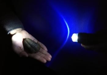 29.+30.12.17 19 Uhr Taschenlampen-Führung