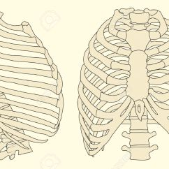 Rib Cage Bone Diagram Relay Wiring 5 Pole Ribs And The Spine Back To Health Wellness Centre