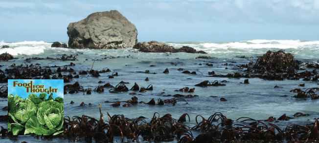 North Coast Seaweed Podcast