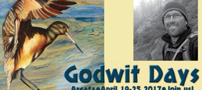 Godwit Days with Michael Kauffmann