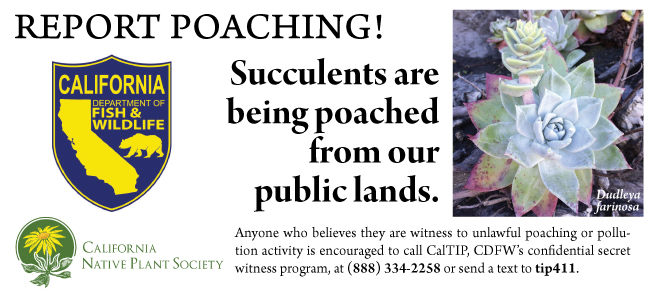 Report Poaching