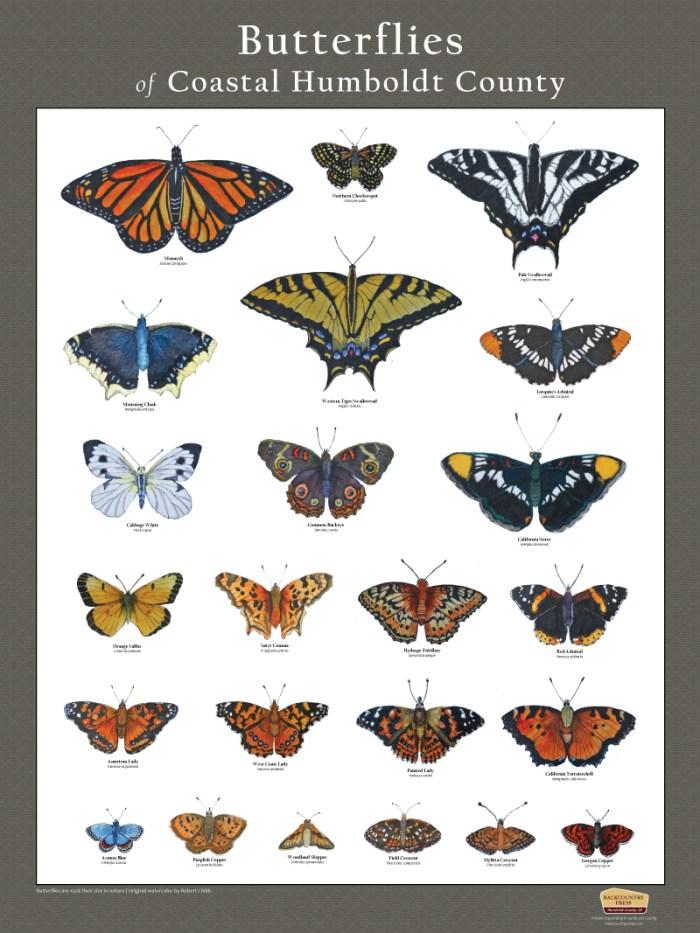 Butterflies of Coastal Humboldt County