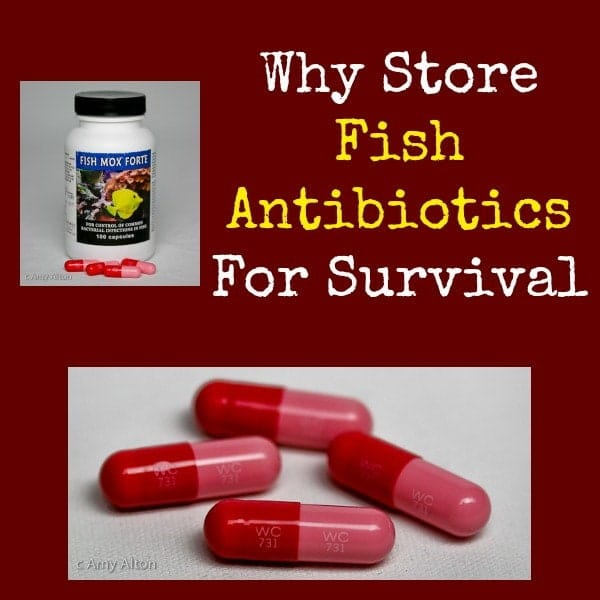 Why Store Fish Antibiotics for Survival | Backdoor Survival