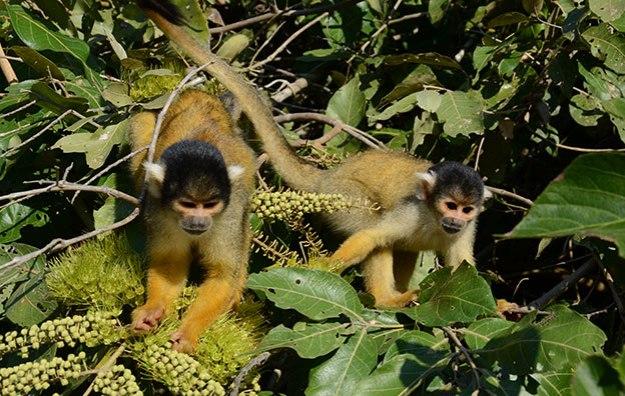 La Selva et La Pampa de Rurrebanaque, top 2 des incontournables de la Bolivie