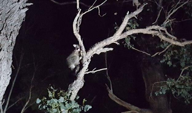 Observer des animaux dans le Victoria
