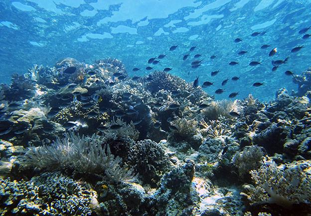 Plonger en Sulawesi à Bunaken