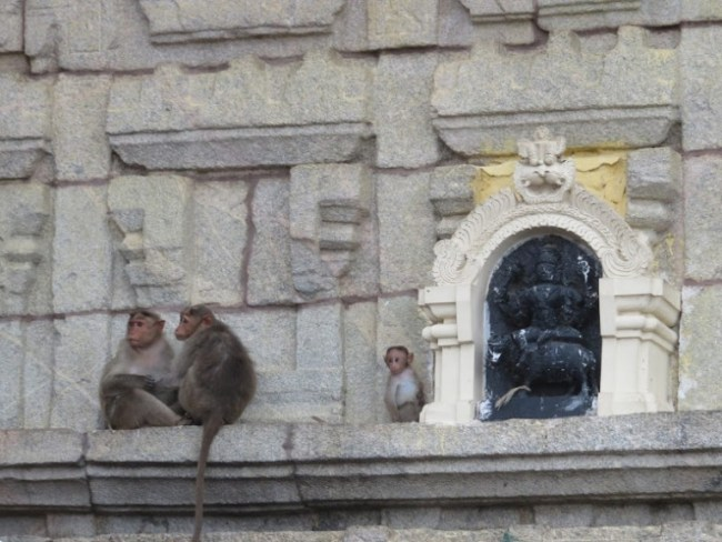 things to do in mysore: monkeys at chamundi hill