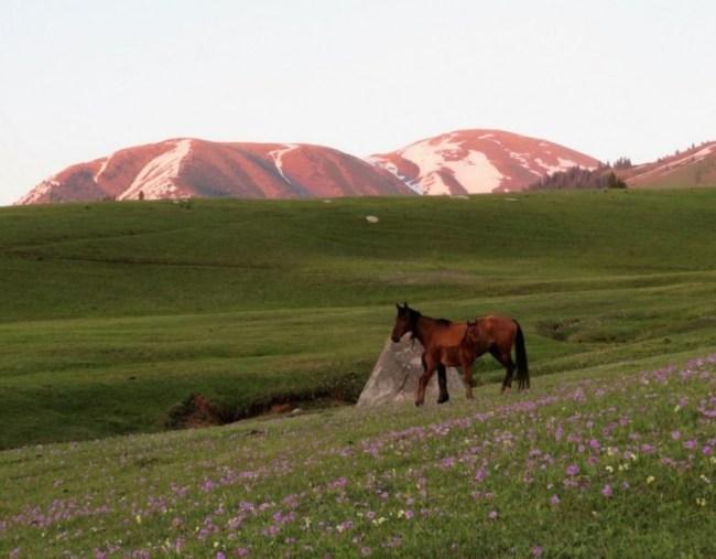 Horse back riding in Jyrgalan Kyrgyzstan