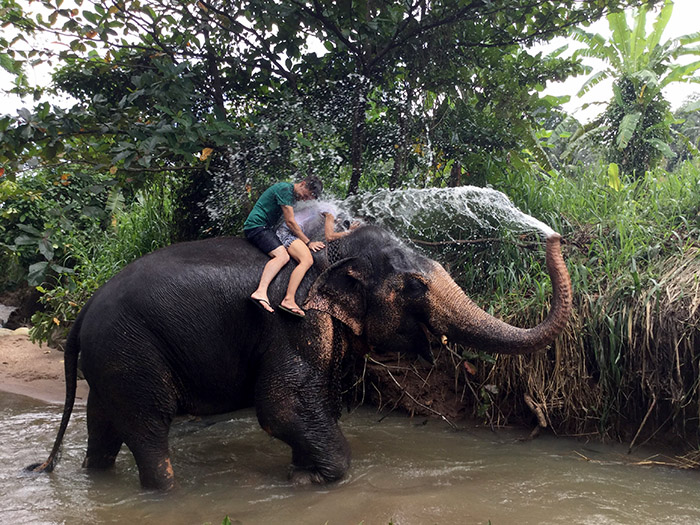 ravi_elephant_couch_surfing