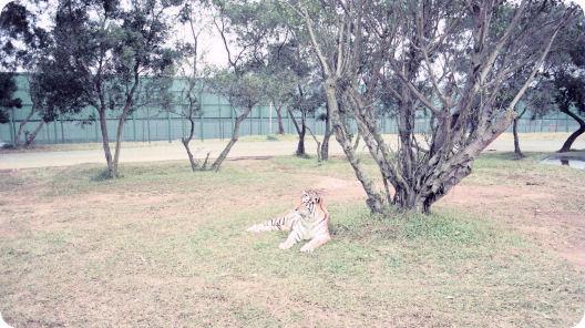 第11天: 臺北,小人國,六福動物園 – 臺灣環島自助遊 1989
