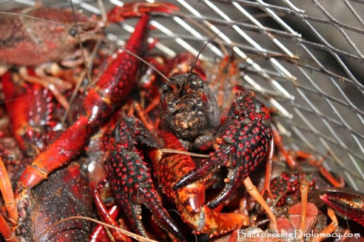 A large red crawfish in a basket