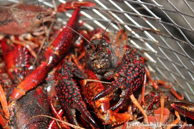 comer crawfish en louisiana