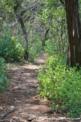 Hiking trail in Louisiana
