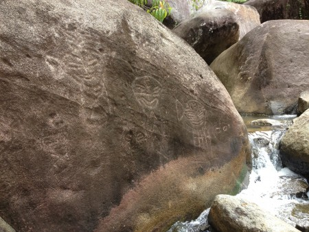 taino petroglyphs in el yunque rainforest