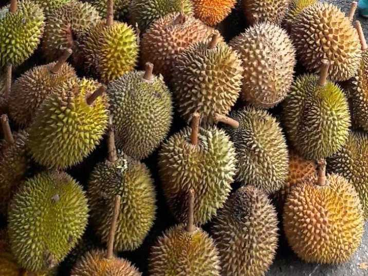What is Durian like?
