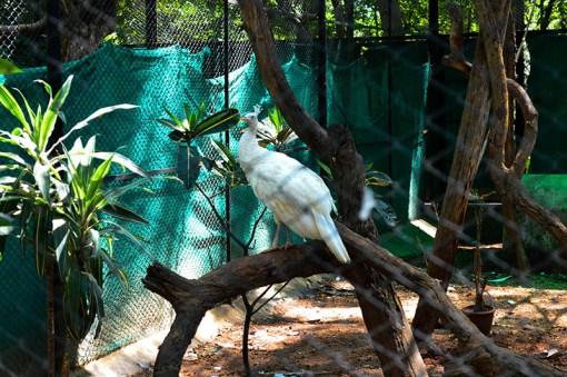 mysore-zoo (4)
