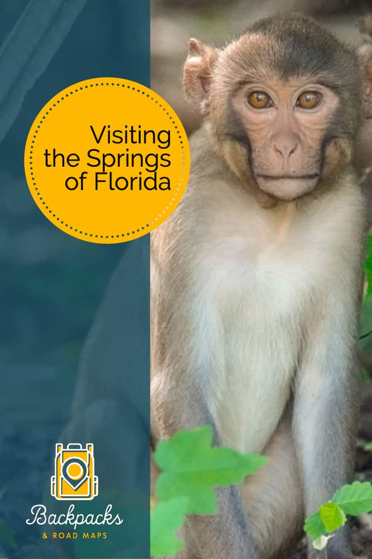 What do wild monkeys, manatees, crystal clear springs, and glass bottom boats all have in common? You can find them all during your trip to the lesser known areas of central Florida!