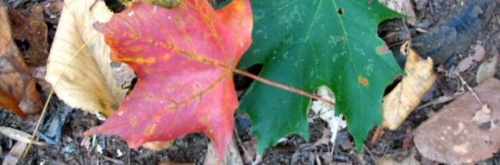 Red Green Autumn Leaves