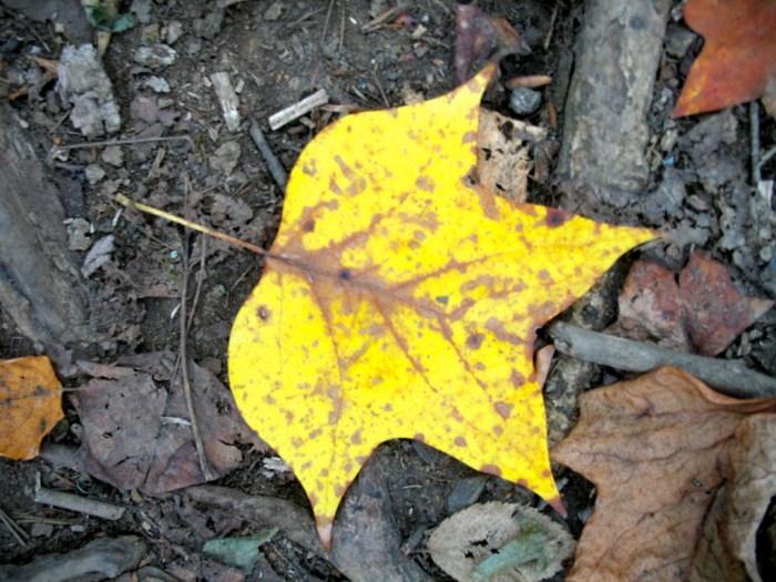 IMG 3859.JPG Version 2 1024x768 - Hike the Joyce Kilmer Memorial Forest
