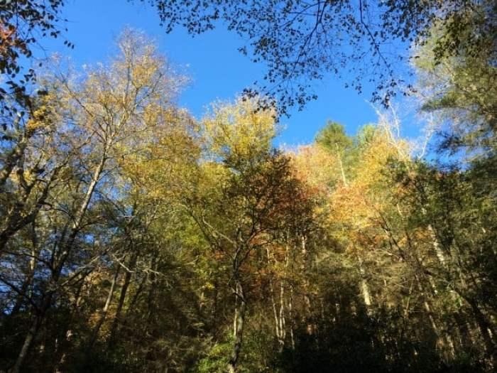 Autumn Sky and Color Georgia