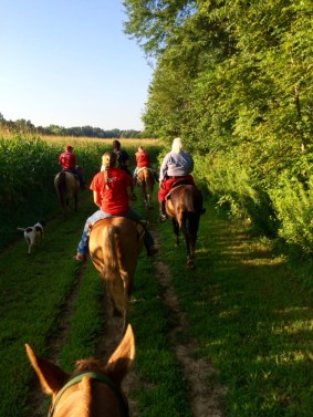 Riding Horses through Indiana Corn Field