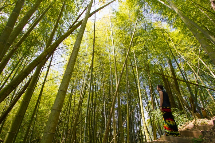 Alishan National Scenic Area Ruitai Bamboo Forest