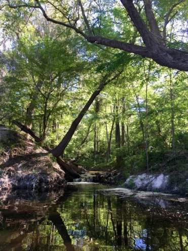 Mill Creek Falls Suwannee River Florida