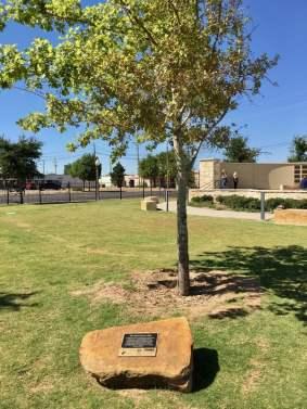 MCartney Oak West Texas Walk of Fame Lubbock Texas