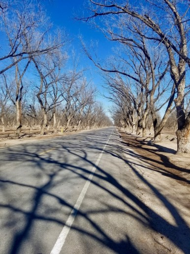 bare trees lining a roadway