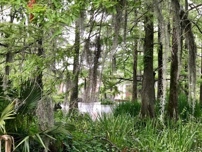 IMG 4580 - Three Perfect Days in Lafayette, Louisiana