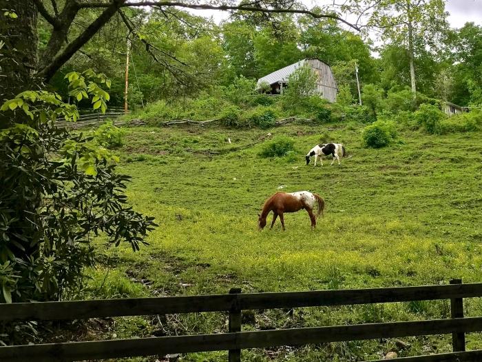 IMG 5646 - Franklin, North Carolina: A Smoky Mountain Adventure