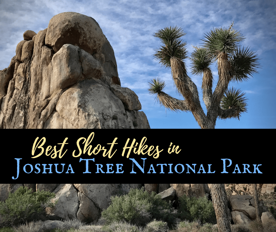 Best Short Hikes - Best Hikes in Joshua Tree National Park on a One-Day Trip