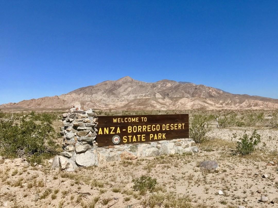 IMG 2136 - Wildflower Chasing at Anza-Borrego Desert State Park California