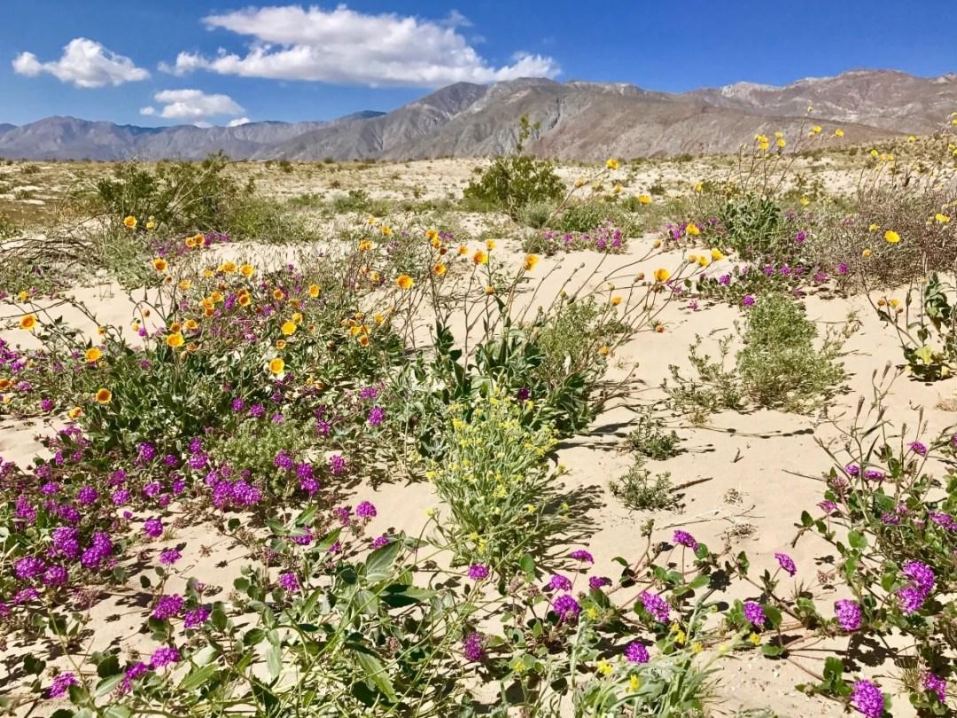 IMG 2295 - How to Plan a California Desert Camper Van Road Trip