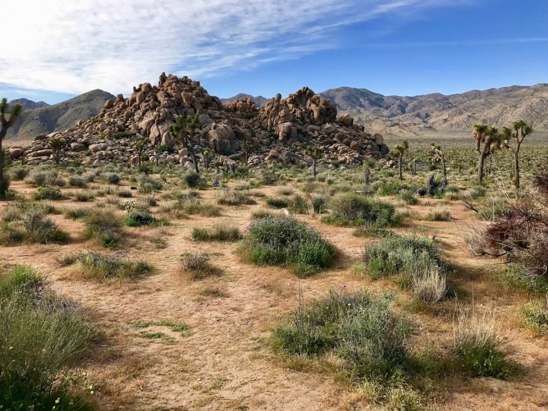 IMG 2369 - Best Hikes in Joshua Tree National Park on a One-Day Trip