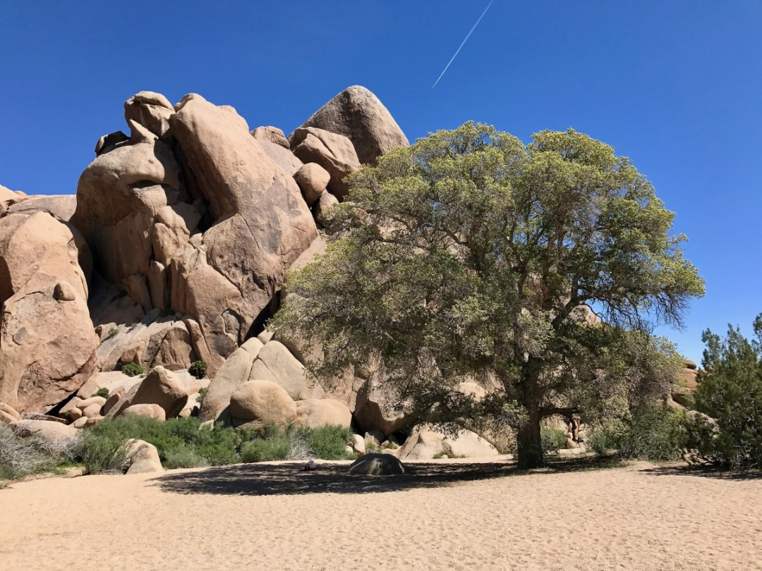 IMG 2545 - Best Hikes in Joshua Tree National Park on a One-Day Trip