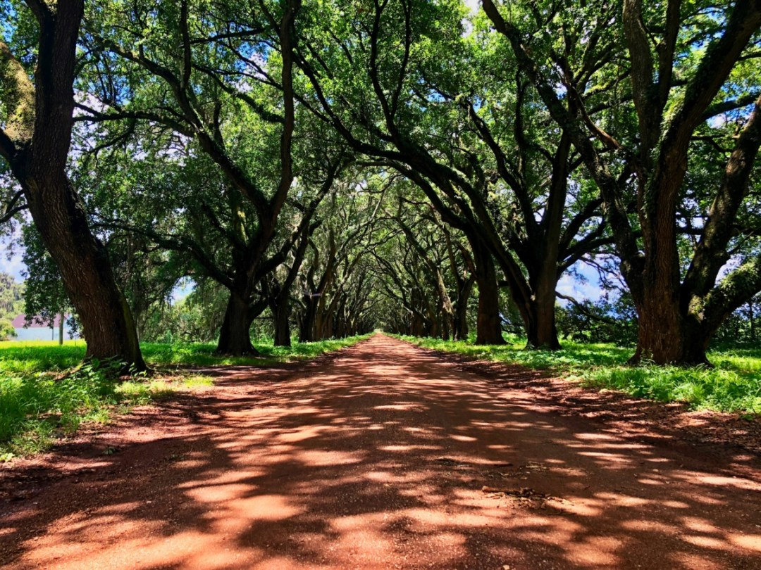 IMG 2410 - 6+1 Louisiana Plantation Tours that Interpret the Slave Experience