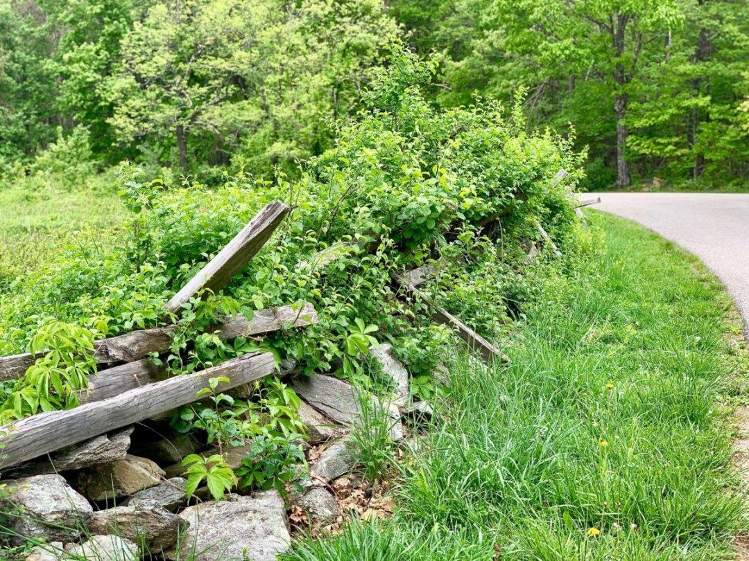 split rail fence vines - Visit Waynesboro Virginia: Gateway to the Shenandoah Valley