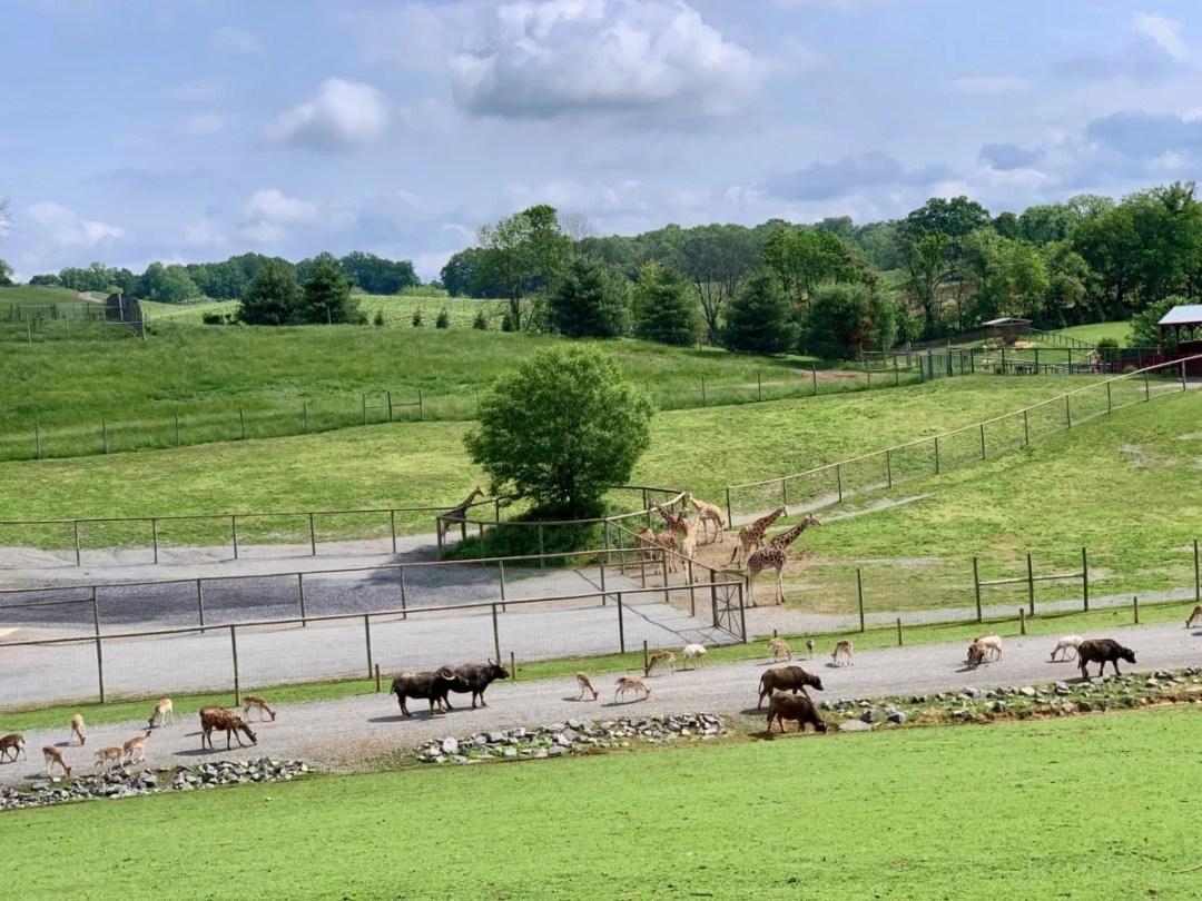 Virginia Safari Park - Scenic & Historic Things to Do in Lexington, Virginia
