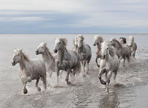 Marco_Carmassi_-_Wild_Horses_large
