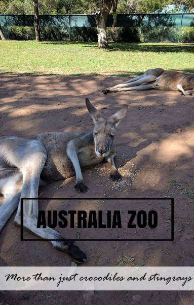 Australia Zoo - More than just crocodiles and stingrays