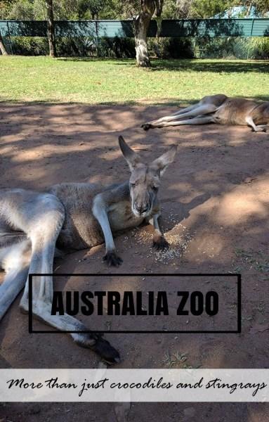 Australia Zoo - More than just crocodiles and stingrays